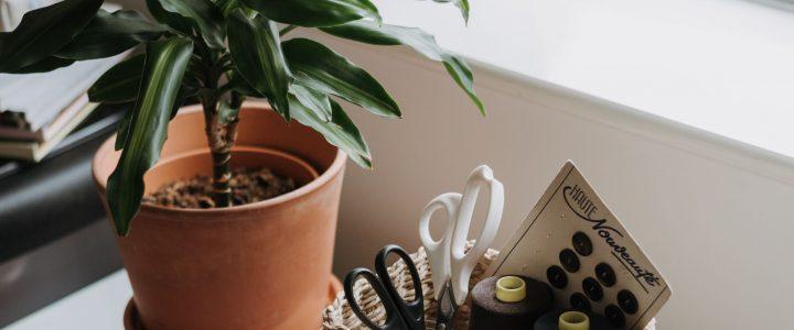 Een kantoor plant voor gezondheid en welzijn op de werkplek